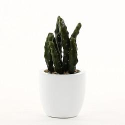 Cactus en pot 27cm - Vert