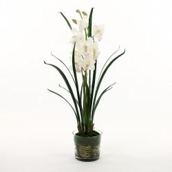 Orchidée Cymbidium dans pot en verre avec mousse 95cm - Blanc
