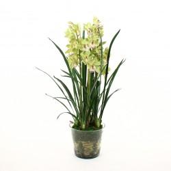 Orchidée Cymbidium dans pot en verre avec mousse 109cm - Vert