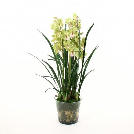 orchid 233 e cymbidium dans pot en verre avec mousse vert 109cm pauline h