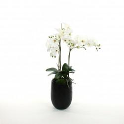 Orchidée Phalaenopsis en pot 94cm - Blanc