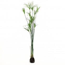 Papyrus grass soil - Green 152cm
