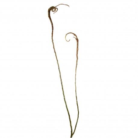 Branche de Saule plat 152cm - Marron