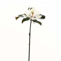 Magnolia Fashion 61 cm - Champagne