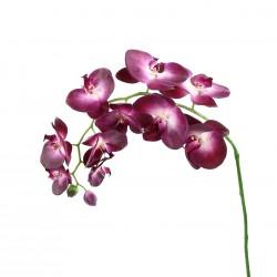 Orchidée Phalaenopsis 99cm - Fushia