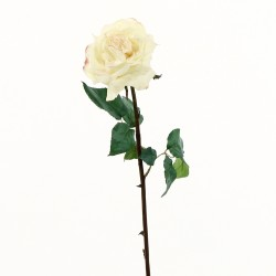 Rose Duchesse ouverte tige courte 51cm - Champagne