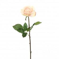 Rose Duchesse ouverte tige courte 51cm - Rose