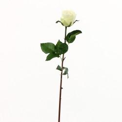 Dutchess bud Rose 61cm