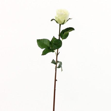 Rose Duchesse bouton 61cm - Vert clair