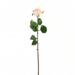 Rose Duchesse bouton 61cm - Rose
