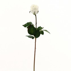 Rose Duchesse bouton 74cm - Blanc
