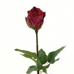 Rose Duchesse bouton tige courte 52cm - Rouge Fushia