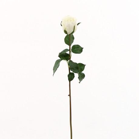 Rose Duchesse bouton 61cm - Blanc