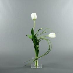 Flat M - Tulipe bouton blanc