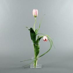 Flat M - Tulipe bouton rose