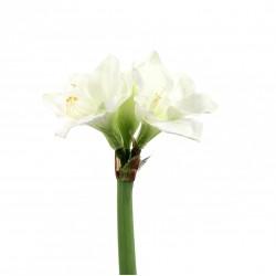 Amaryllis 2 têtes 48cm - Blanc