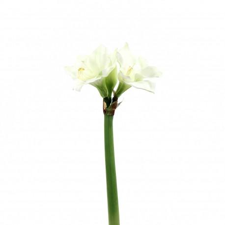 Amaryllis 2 têtes 70cm - Blanc