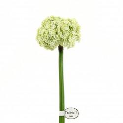 AlIium stem 81cm