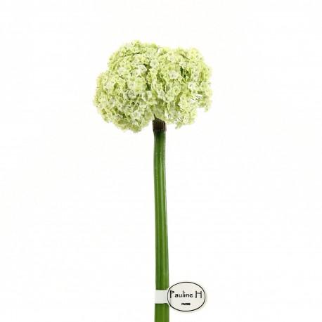 Allium 81cm - Vert clair