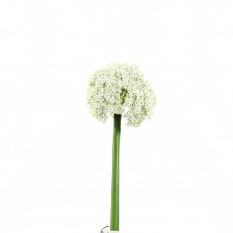 Allium 81cm - Blanc