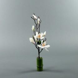 Bambou S - Magnolia semi-ouvert blanc (79820)