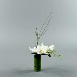 Bambou S - Orchidée courte blanc (80079)