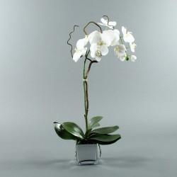 Cube silver L - Orchidée blanc (76997)