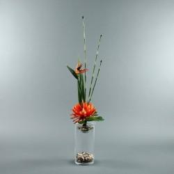 Exotic Aqua L - Oiseau Paradis, Lotus orange