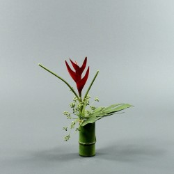 Bambou S - Heliconia rouge