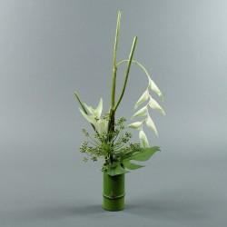 Bambou M - Heliconia blanc, Pendula blanc