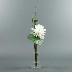 Flat S - Lotus blanc, pod