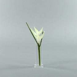 Para S - Heliconia white 36cm