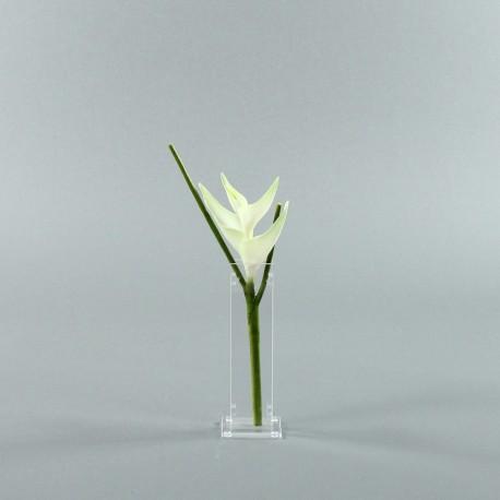 Para S - Heliconia blanc