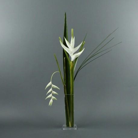 Para M - Heliconia blanc, Pendula blanc