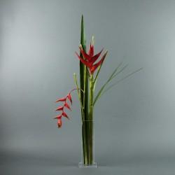 Para M - Heliconia rouge, Pendula rouge