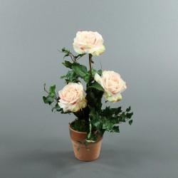 Pot en Terre Cuite - Rosier rose, Lierre