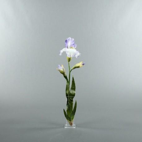 Para S - Iris lavande