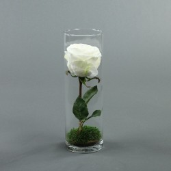 Cylindric haut - Rose blanc
