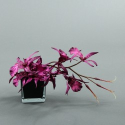 Cube S black - Orchidée spider fushia