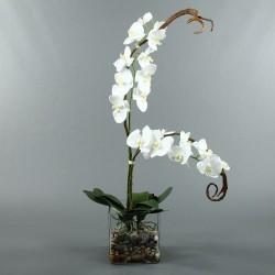 Cube L Clear - Orchidée blanc