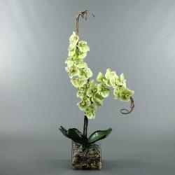 Cube L Clear - Orchidée vert