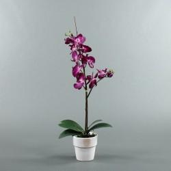 Pot en Terre Cuite blanc - Orchidée fushia