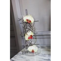 Cristal Curve - Splint - Orchidée vert