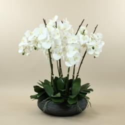 Coupe rond noir L - Orchidée blanche x 8