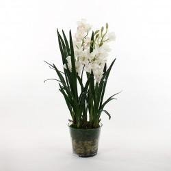 Orchidée Cymbidium dans pot en verre avec mousse 109cm - Blanc