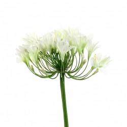 Agapanthe 90cm - Blanc