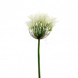 Agapanthe 60cm - Blanc