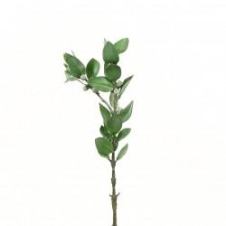 Eucalyptus 52cm - Vert