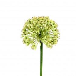 Larane Lily 91cm - Vert clair