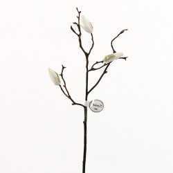 Magnolia branche de boutons 53cm - Champagne